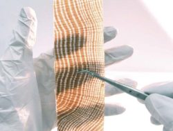 Un bois transparent qui pourrait révolutionner le bâtiment