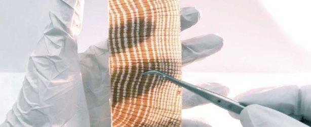Le remplacement de la lignine du bois par un monomËre cristallin le rend transluci