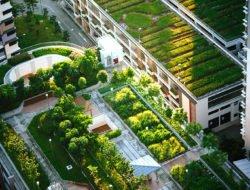 Urban Farm © Chuttersnap
